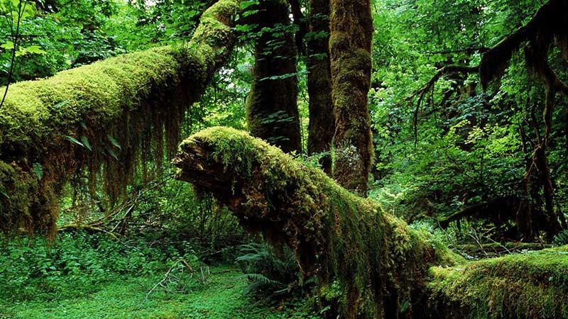جنگل سرسبز آمازون