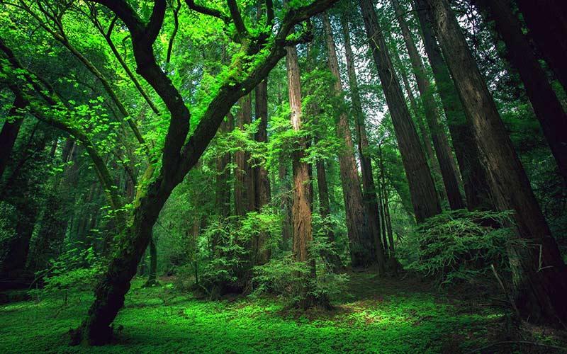 جنگل گردی