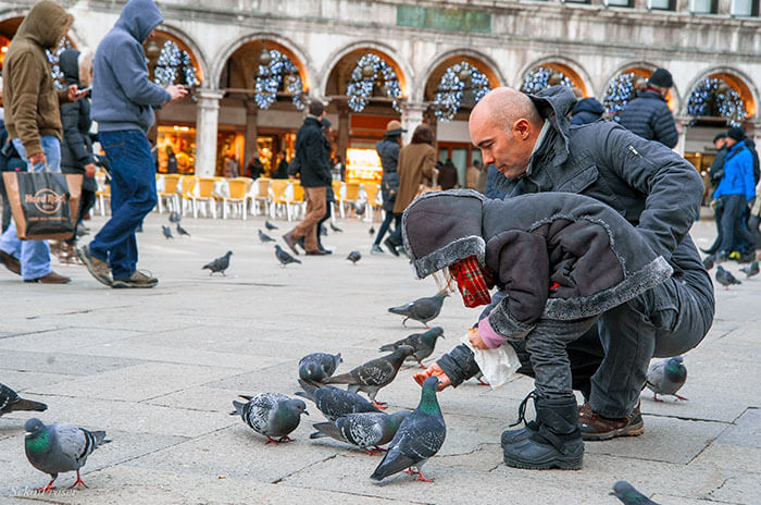 غذا دادن به کبوترها در ونیز