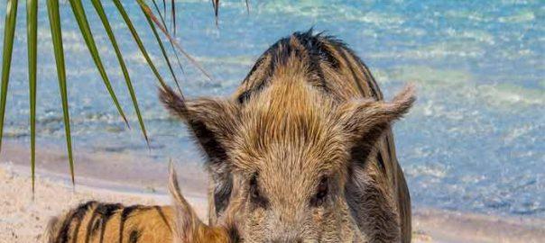 جزیره حیوانات