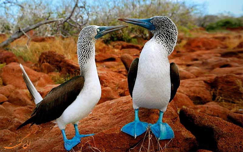 پرندگان جزایر گالاپاگوس