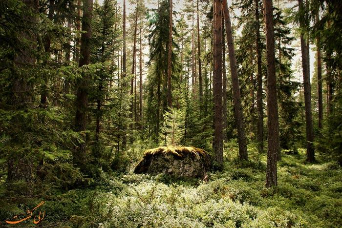 جنگل های انبوه