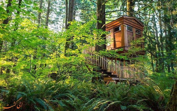 اتاق های جذاب هتل درختی