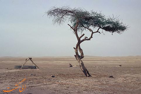 درخت تنر