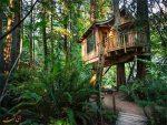 این هتل بر روی درخت ساخته شده! (عکس)