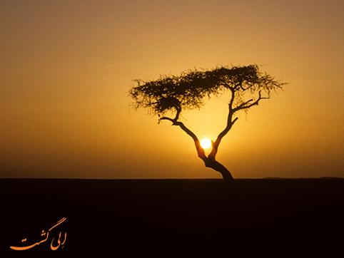 تنهاترین درخت روی زمین | تنر