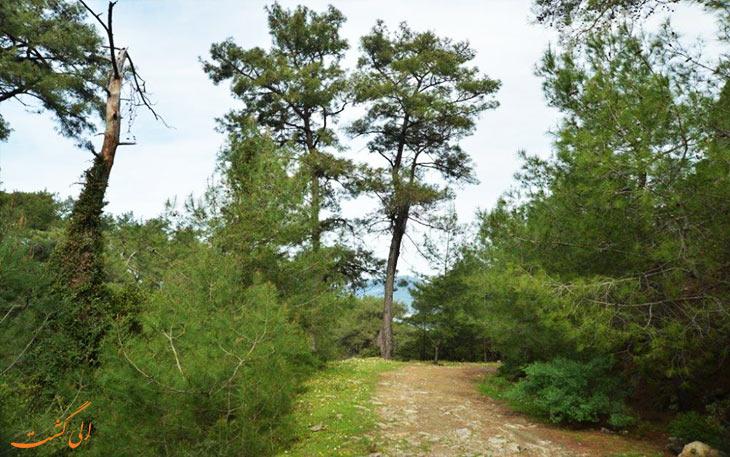 گونه های گیاهی پارک ملی مارماریسگونه های گیاهی پارک ملی مارماریس