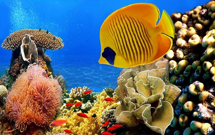 ماهی های زیبای آکواریوم کیش