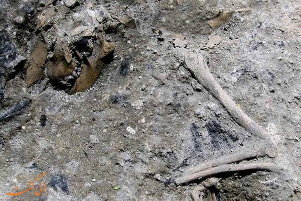 بقایای جسد حیوان 1800 ساله