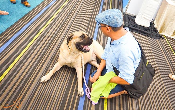 سگ های خیابانی تایلند