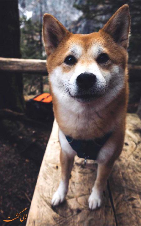سگ های اینستاگرام بامزه