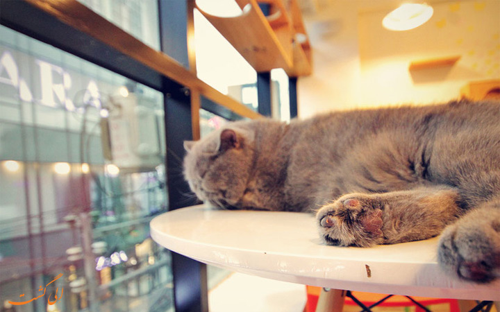 کافه گربه