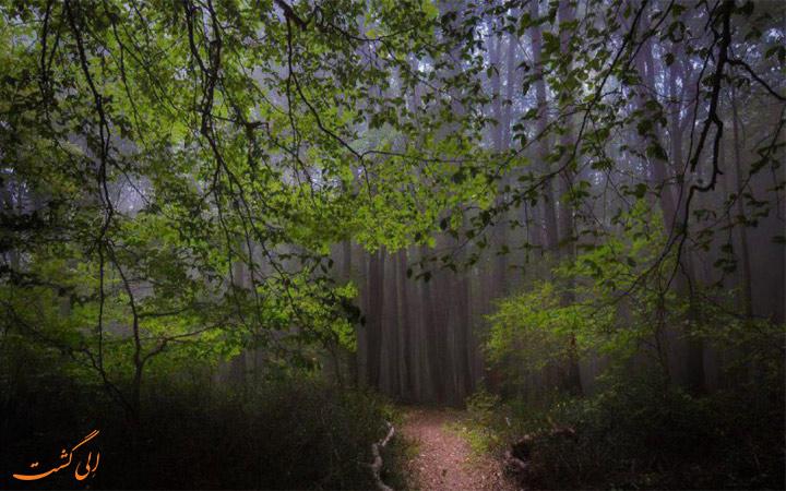 نمایی از درختان الیمستان