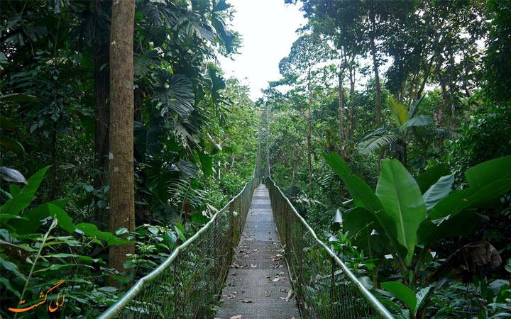 جنگل های بارانی
