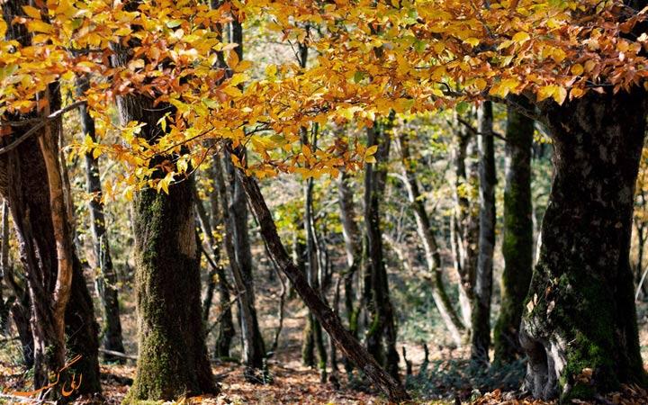 الیمستان در پاییز