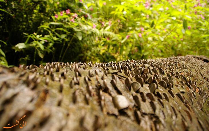 درخت پول در انگلیس