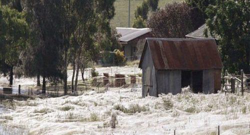 باران عنکبوت در استرالیا