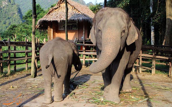 فیل های تایلند
