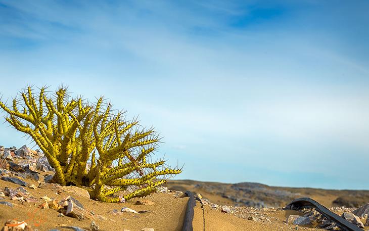 پارک ملی نامبیا