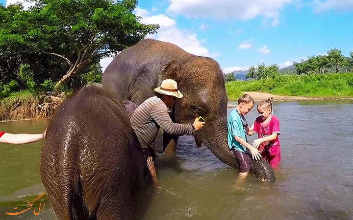 فیل ها در رودخانه