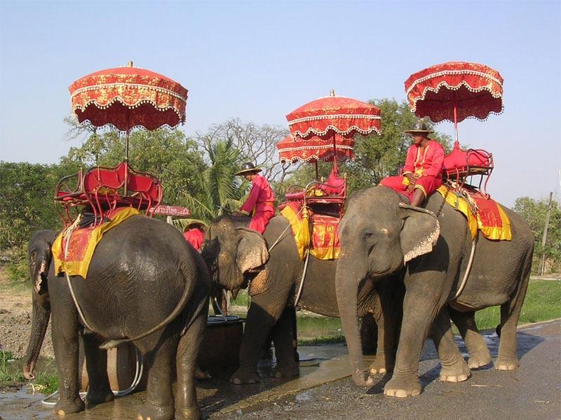 ملاقات با فیل ها