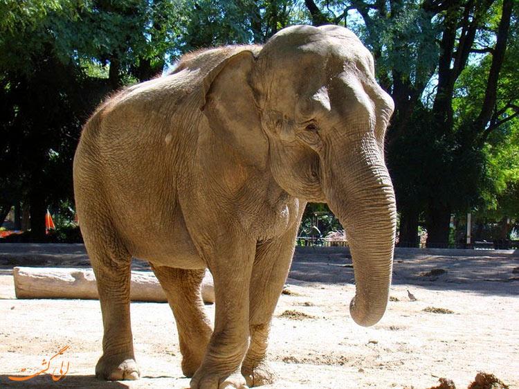 فیل های هندی
