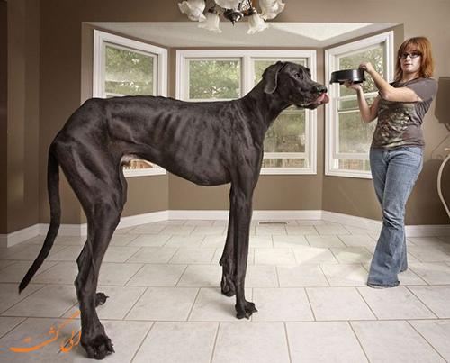 بلندترین سگ دنیا
