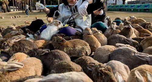 حقایق عجیب ژاپن