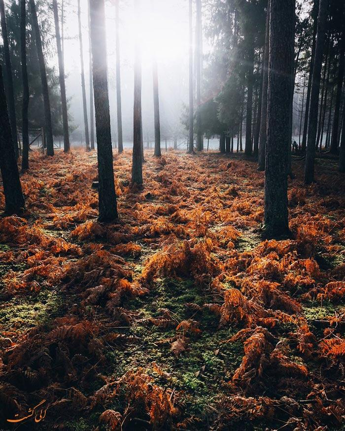 جنگل های آلمان