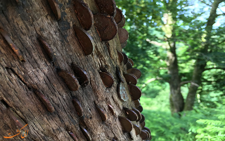 درختان پول عجیب در انگلیس