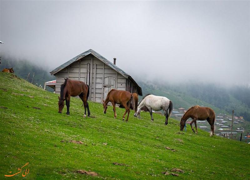 اسب های روستای اولسبلنگاه
