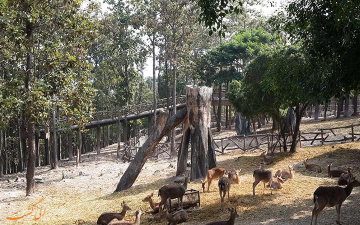 محوطه ی باز باغ وحش چیانگ مای