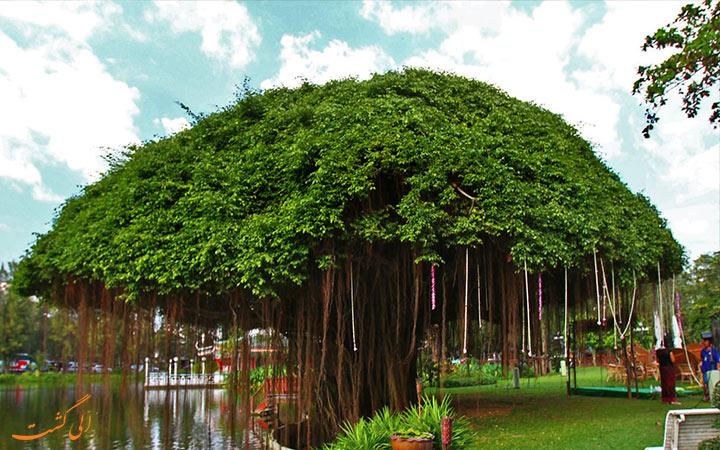 محوطه باغ رز گاردن