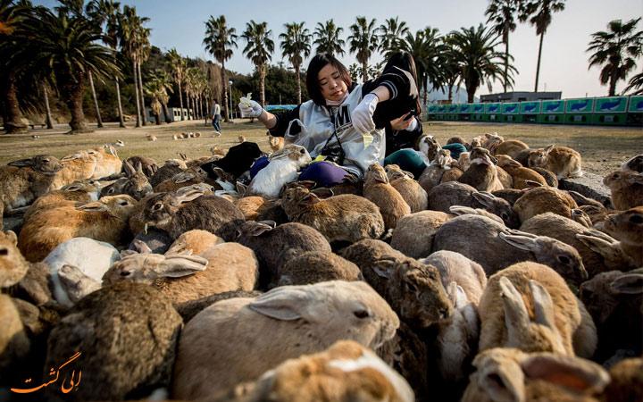 جزیره خرگوش