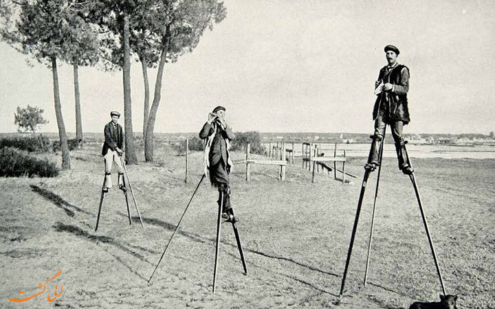 عصای واکر چوپان های فرانسه