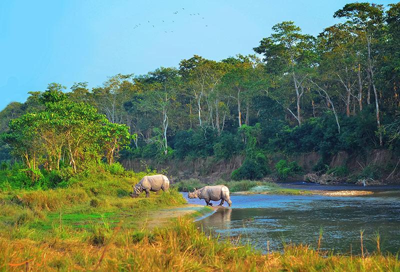 جنگل های چیتوان نپال