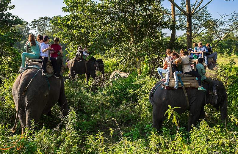سافاری در جنگل های چیتوان نپال