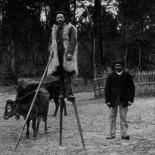 عکسی قدیمی از چوپان فرانسوی