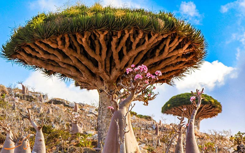 جزیره سقطرا