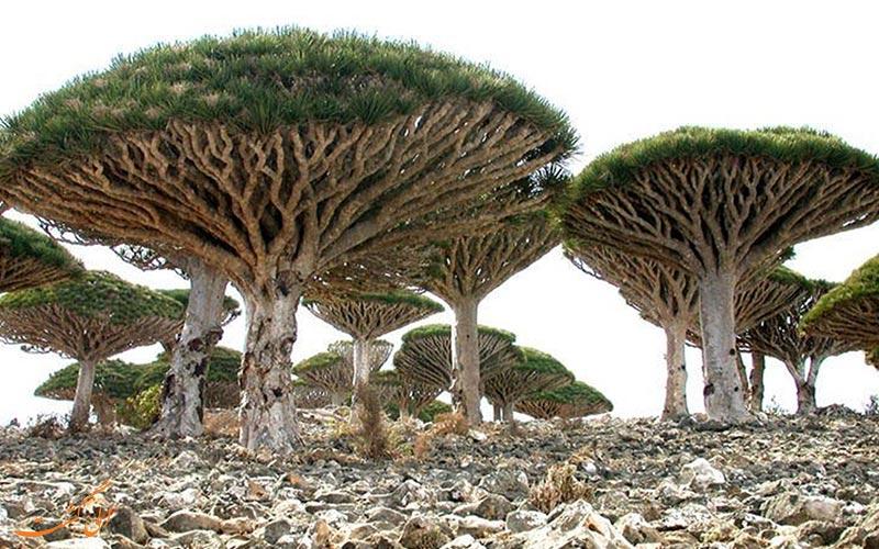 جزیره سقطرا در یمن