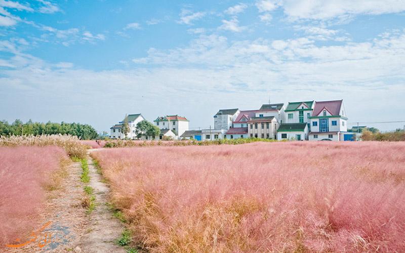 مزرعه صورتی در چین
