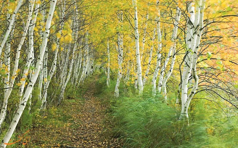 درختان پاییزی