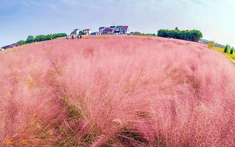 مزرعه ای خوشرنگ در چین