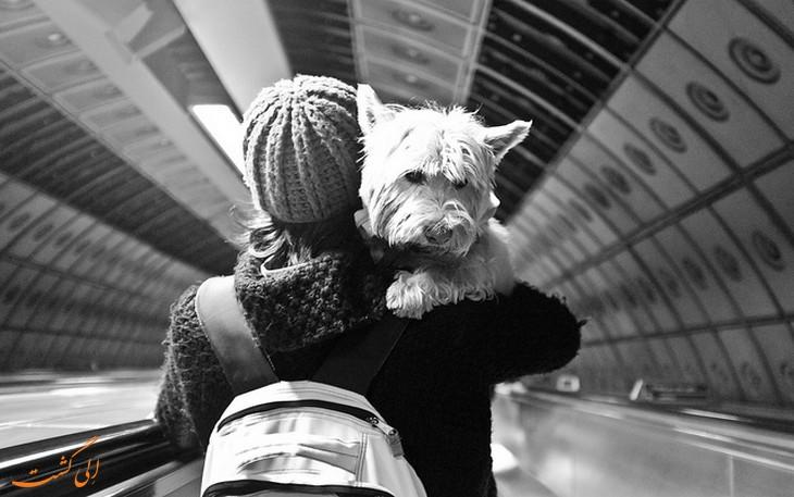 حیوان خانگی در سفر