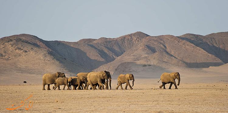 حیوانات صحرای نامیب