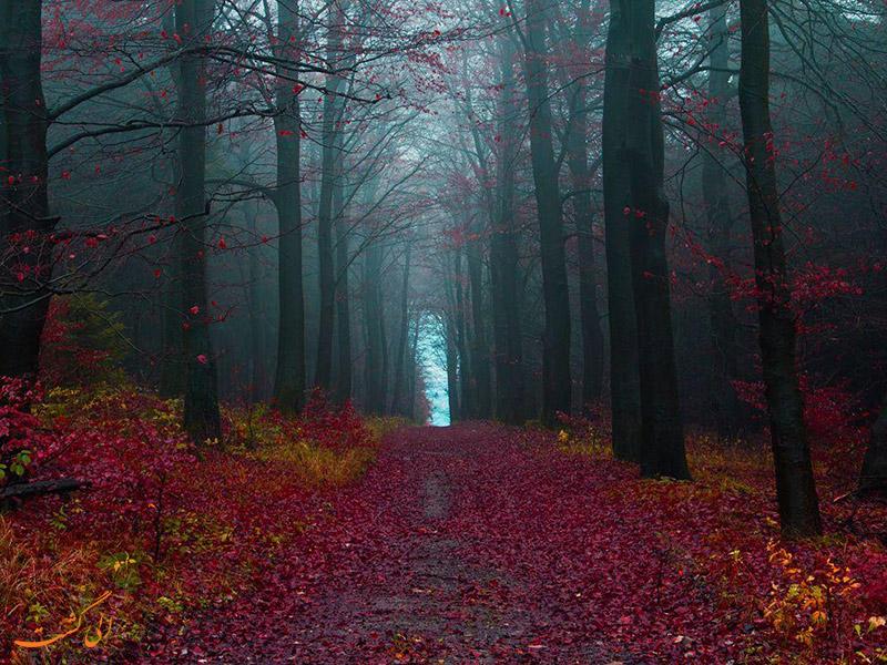 مسیر تیمبرلند در جنگل سیاه آلمان