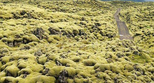 زمین های خزه ای ایسلند
