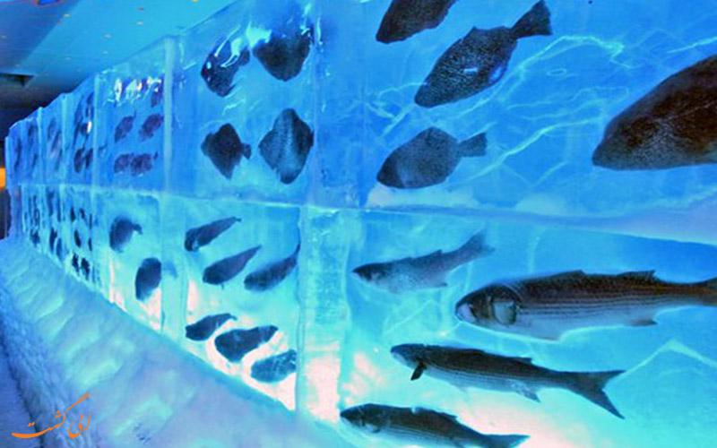 ماهی های یخ زده ی ژاپن