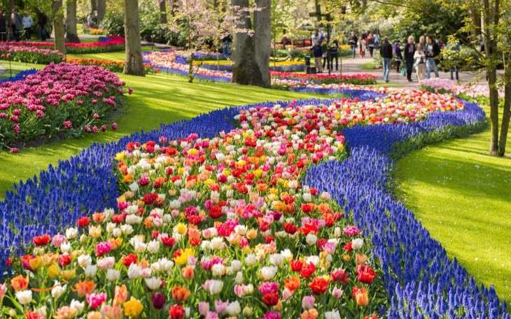 باغ گل کوکنهوف هلند