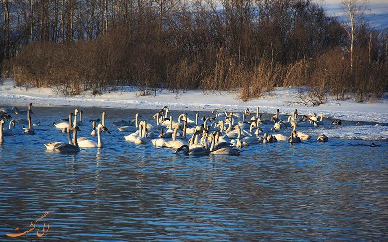 دریاچه سیبری